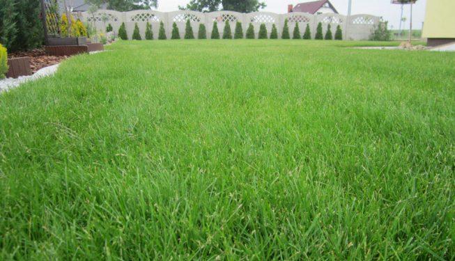 Nowy trawnik wokół domu