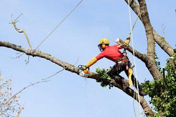 Alpinistyczna wycinka drzew