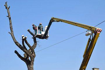 Wycinka i przycinka drzew
