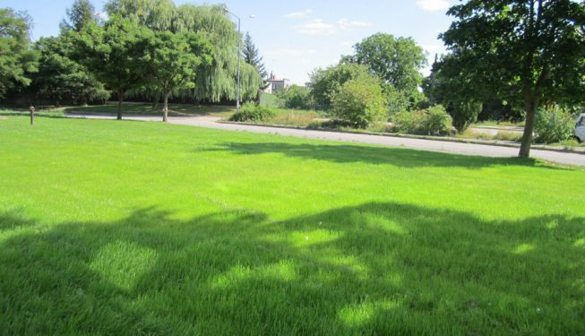 odbudowa zniszczonego trawnika