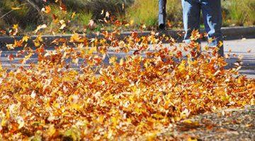 Jesienne sprzątanie liści