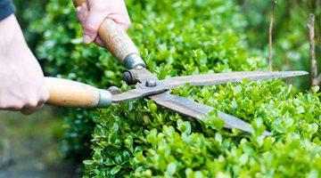 Kompleksowe pielęgnowanie ogrodów