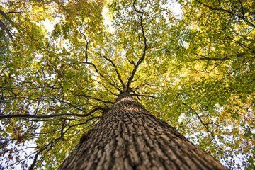 Pielęgnacja drzew objętych ochroną