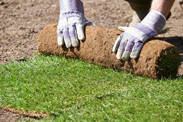 Trawnik z rolki