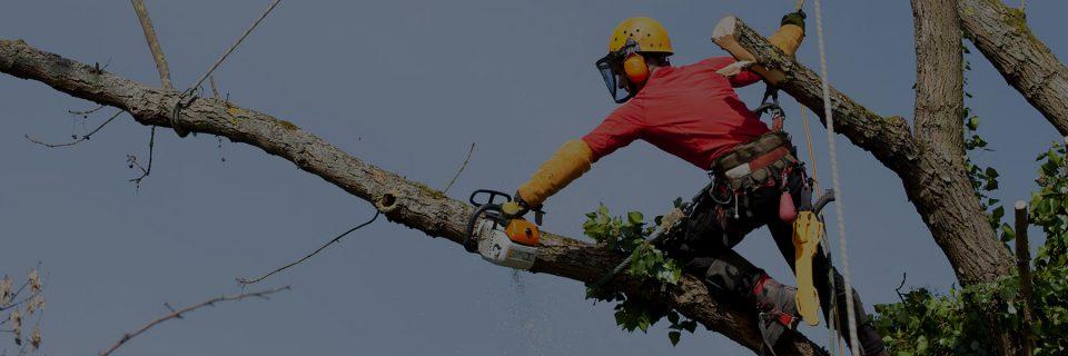 Wycinka drzew w trudnych warunkach